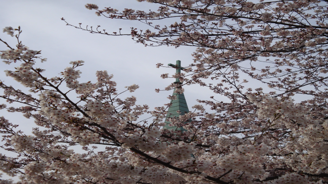 Imaike Church Blossoms
